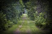 Dirt road lined with shrubs and trees through dense green forest. Intentionally shallow depth of field.