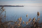 stock photo of sea oats  - Sea oats growing along the shore with the Chesapeake Bay Bridge in Stevensville - JPG