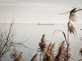 Sea oats growing along the shore with the silhouette of a cargo ship on the Chesapeake Bay in the background.
