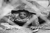 pic of tortoise  - Tortoise trapped in a cage and tortoise crawling