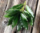 Laurel leaves on a wooden background