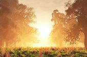 Mysterious Magic Forest Sunset Sunrise