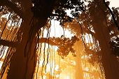 stock photo of mystique  - Mysterious Deep Jungle in the Sunset - JPG