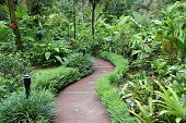 path in rain forest costa rica
