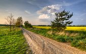 dirt road to home