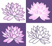 Set of Pink lotus. Vector illustration