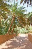 stock photo of riyadh  - Palm garden in the Riyadh city - JPG