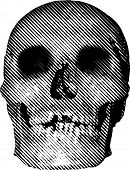 vector simple illustration with halftone line raster skull
