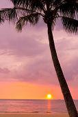 Tropical Sunset, Divine Evening Scene