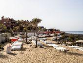 stock photo of palm  - Palm Mar Tenerife Canary Islands - JPG