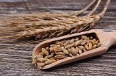 pic of whole-grain  - Organic whole rye grain with spoon and ears of rye lying on wooden background - JPG