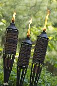 stock photo of citronella  - Bamboo citronella torches to repell mosquitoes and other insects - JPG