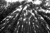 Black & White Wide Angle Woods