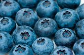 picture of extreme close-up  - blueberry extreme close up  - JPG