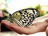 Schmetterling auf Seite