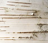 Birch Bark Abstract