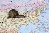 A snail travelling throughout the United States on a map