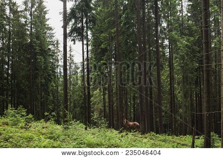 Beautiful Brown Lonely Horse Standing