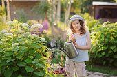 Happy Child Playing Little Gardener And Watering Hydrangea Bush In Sunny Summer Garden, Little Helpe poster