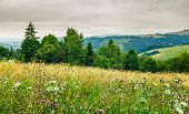 Grassy Meadow On Forested Hill. Lovely Nature Scenery On An Overcast Day In Summer poster