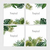 Collection Of Square Backdrops With Green Tropical Leaves. Bundle Of Backgrounds With Foliage Of Pal poster