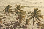 Beautiful Tropical Palm Trees Against The Background Of The Sea And Sun. Palm Trees On A Sunset Back poster