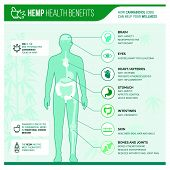 Medicinal Hemp Health Benefits Vector Infographic With Human Body And Icons poster