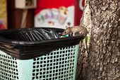 Young City Rat Searching For Food In An Outdoor Cafe Trash Bin. Cute Grey Mouse Scavenging Garbage poster