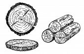 Wood Logs, Trunk Sketch Illustration. Hand Drawn Wooden Materials. Firewood Sketch Set. Annual Rings poster