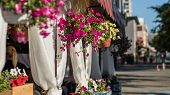 Blooming Flowers On A Wooden Veranda Or Terrace Along A City Street On A Sunny Day poster
