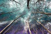 Árboles contra el cielo