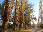 otoño en mendoza, argentina