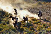 Cowboy's Dream