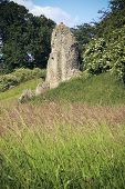 pic of bailey  - overgrown ruins of berkhamsted castle in hertfordshire england built by the normans in the motte and bailey style - JPG