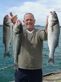 Large Sea Bass
