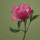 peony stained glass window