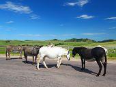 picture of burro  - Begging burros on the Wildlife Loop Road at Custer State Park in South Dakota - JPG