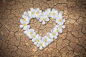 foto of broken heart flower  - Plumeria flowers heart on Dry cracked earth background - JPG