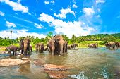 picture of indian elephant  - Small and Big elephants playing in the river - JPG