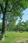Paisaje de forestación en un parque