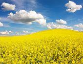 Bereich der RaPS mit schöne Wolke Pflanze für grüne Energie