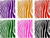 Vector Color Zebra Skin Set
