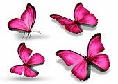 Four Pink Butterfly, Isolated On White Background
