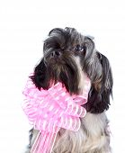 Portrait Of A Decorative Doggie With A Pink Bow