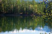 Forest Lake, Wild Landscape
