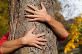 Hands Around The Tree