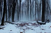 pic of snowy-road  - Snowy forest trail shrouded in fog and mystery - JPG