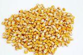 Kernels Of Corn 3