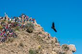 AREQUIPA, PERU - JULY 30: tourists watching condors in the Colca Canyon at Arequipa Peru on july 30th, 2013. It is Peru's third most-visited tourist destination with about 120,000 visitors annually