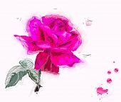 Painting pink Rose
